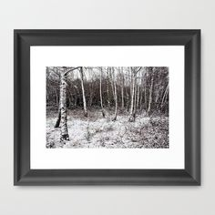 Winter birches Framed Art Print by Pirmin Nohr - $32.00 A little forest of birches in the snow  nature, winter, black and white, tree, birch, birch tree, landscape