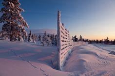 Lapland Snow  Pristine and wonderful, Finnish lapland captured by Antti Pietikainen.