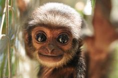 Does a baby Gibbon make the cut?? - Imgur