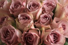 rose colors - Google Search