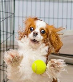 This is how I feel when a football comes at me, hahaha!!!