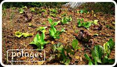 #potager o #huerto para entretenimiento de los más pequeños