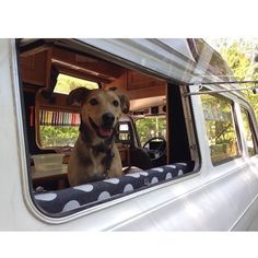 Even the dog enjoys the #vanlife  As long as we're within reach, around or where he can see us.. he's the happiest dog in the world @mobythedog  #campervan #camper #camplife #vanlife #roadtrip #explore #oldtimer #ford #vintage #retro #campmobile #homewheels #vanlifediaries #lifesaver #adventure #travel #diyvan #ambulance #transit #fordtransit