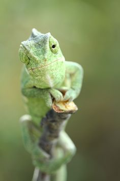 I'm a Chameleon. I change according to my surroundings. I'm awesome. Sometimes my tail comes right off, and I regrow it.