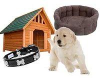 101 mascotas: Accesorios básicos para perros