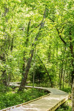 Huntsville State Park, Texas. Zuri would love it here !