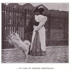 Onze huisdieren, Elsevier ,Amsterdam, 1905, many images Foto von janwillemsen auf flickr