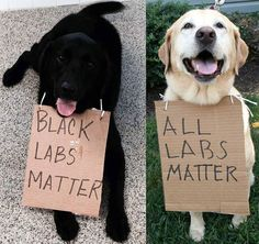Black Labs Matter . . . All Labs Matter!!! Ha ha ha. True!! Take that!!!