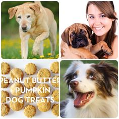 A great fall treat for dogs: peanut buttery, pumpkiny loooove.   For more doggie treats visit Wooftown.com