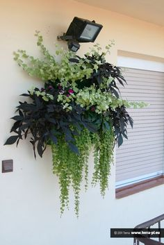 Green Garden, Succulents Garden, Potted Plants, House Plants, Balcony, New Homes, Indoor, Patio, Flower Containers