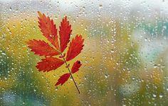 Обои картинки фото макро, лист, окно, стекло, капли, дождь