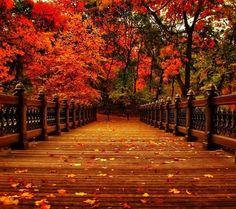 Superbe paysage d'automne