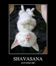 Savasana cat! #yoga ♥♥♥ www.destressyoga.org♥♥♥