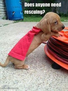 Need Rescuing?