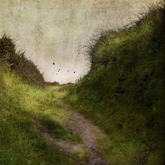The Brilliance of Ordinary by jamie heiden, via Flickr