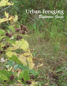 Pocket Urban Foraging Guide  http://www.wildfoodschool.co.uk/urban/wfsURBANGUIDE.pdf