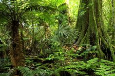 9508120-Tropical-jungle-forest-Stock-Photo.jpg (1300×866)