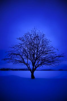 Rocita Nacidad /Árboles de Navidad Artificiales Peque/ño Plant Simulation Nevado de Escritorio /árbol de Navidad