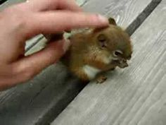 baby talking to a baby squirrel