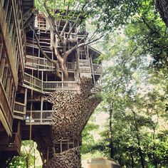 @shelterprotects | Yes it is a 12 story treehouse. | Webstagram - the best Instagram viewer