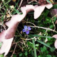 #flower #garden #grass #green #violet #nature #instanature #beauty #foglia #secca #autumn #spring #rondine #primavera #hidden #surprise #power #flowerpower #novellaorchidea #novella #orchidea #raccontierotici #racconti #ebook #ricardo #tronconi #eroticnov