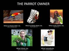 Haha so true! good thing I have a budgie so her messes are tiny! Parrot Pet, Parrot Toys, Funny Birds, Cute Birds, Diy Bird Toys, Feathered Dinosaurs, Funny Parrots, Haha So True, Crazy Bird