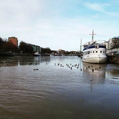 Ducks swimming in the river Aura. Sorsia Aurajoella.  #turku #aurajoki
