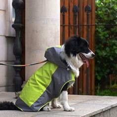 Rain Coat for Medium to Large Dogs Pet Poncho Rain Slicker by Colorfulhouse® #raincoatsforbigdogs #cutedog