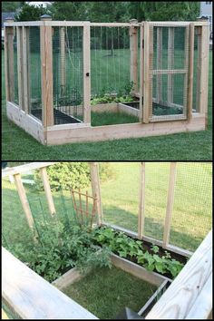 This raised and enclosed garden bed is great for keeping naughty dogs out. But to prevent other critters like squirrels, rats or raccoons from getting to your produce you can build a fully enclosed version!