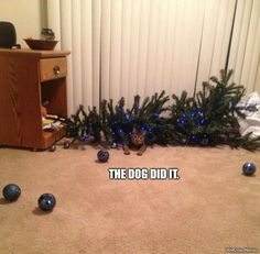 cat-knocks-over-tree