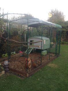 Walk in Chicken Run | Large Outdoor Chicken Enclosure