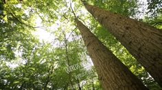 The mighty oak, from sustainable, managed forests in Northern France Oak Framed Buildings, Mighty Oaks, Conservatory, Forests, Carpenter, Sustainability, This Is Us, France, Film