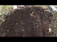 Move to Maximize Space  Plant More - First Garden, New Gardener