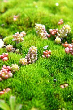 Miniature Forest by Jeremy Reid