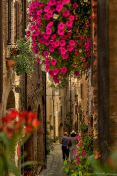 Flowers of Spello, Perugia, Italy https://plus.google.com/+JenniferManteca/posts #travel #italia