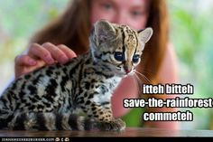 1. I'm pretty sure that's an ocelot.  2. I'm dead.  The adorability factor of the eyes have killed me.
