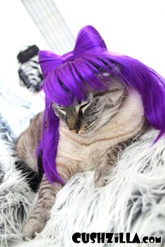 Cat Wig / Dog Wig: Cushzilla Lady Gaga Wig in Fancy Pants Purple from Cushzilla! www.cushzilla.com