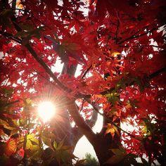 赤と緑と、太陽と。