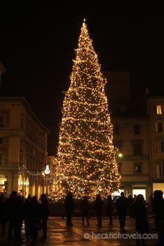 Christmas tree in Bologna's Piazza Maggiore