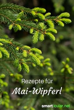 Tannenwipfel recipes – healing power of the forest – Rezepte für Tannenwipfel – Heilkraft des Waldes Every spring firs and spruces drift new branches. These contain many healthy ingredients that you can use in the kitchen. Healing Herbs, Medicinal Plants, Herbal Medicine, Superfood, Good To Know, Natural Health, Health And Beauty, Natural Remedies, Healthy Life