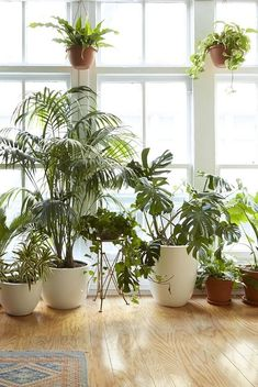 8 Houseplants that Can Survive Urban Apartments, Low Light and Under-Watering #houseplantslowlight
