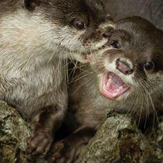 Hey!!!  Don't bite me!!