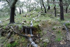 Parque Natural de los Alcornocales / Los Alcornocales National Park