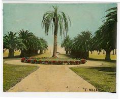 Plaza del Mar, Santa Barbara, California. Katherine Esau, 1923-24.