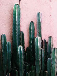Cactus on colour