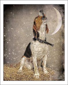 Beagle Dog Canine Photograph 8x10 Wall Art by JakOfArtsPhotography, $30.00