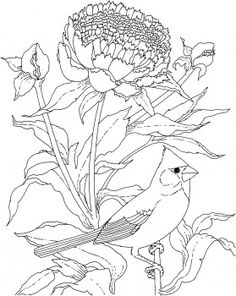 Indiana Flower And Bird