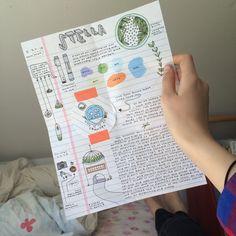 - ̗̀ smell the roses ̖́- Pen Pal Letters, Cute Letters, Pocket Letters, Snail Mail Pen Pals, Snail Mail Gifts, Notes Taking, Aesthetic Letters, Mail Art Envelopes, Envelope Art