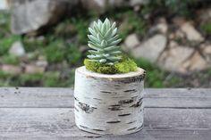 3-step DIY birch log planter - The Snug