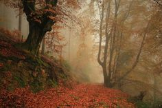 Camino de Orabidea by Margarita Calderó on Foggy Forest, Forest Path, Forest Fairy, Artistic Photography, Nature Photography, Our Planet Earth, Walk In The Woods, Cool Landscapes, Landscape Photos
